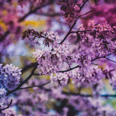 Financially Healthy Spring_no photog credit